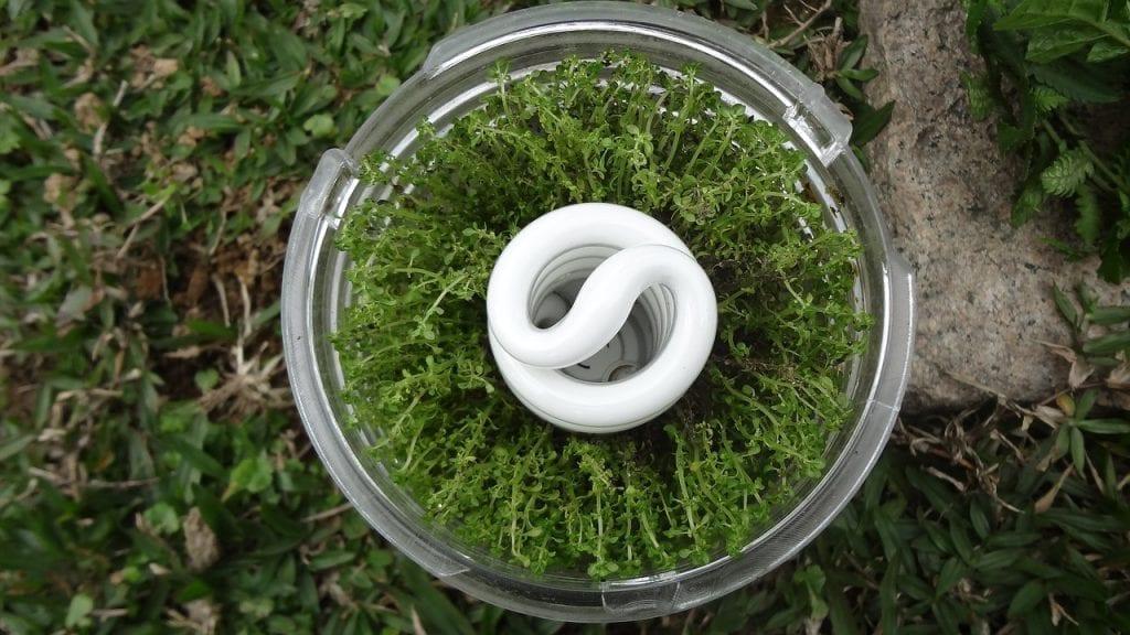 planta rústica para falar sobre economizar de forma sustentável