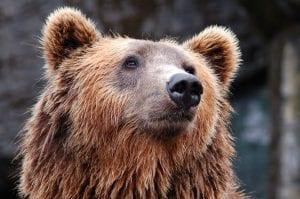 Bear Market: o que é e como identificar essa tendência?
