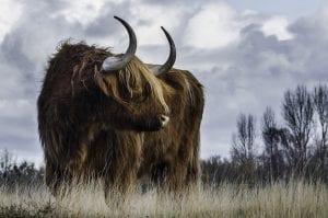 Bull Market: o que é e como identificar essa tendência?